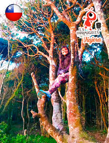 Bosque de la reserva nacional en Cole Cole. - Isla Chiloé - Enero 2018.