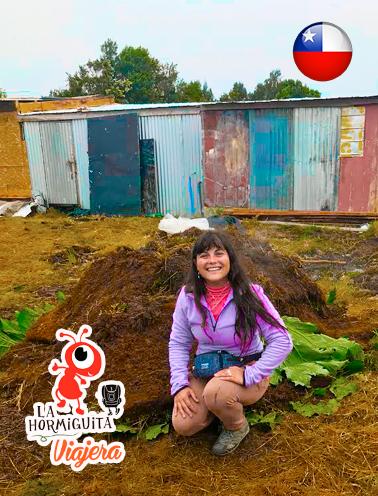Curanto en Festejos de Tradición de Caulín - Isla Chiloè - Enero 2018.